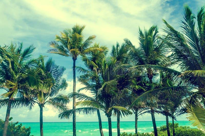 Tropiska Miami Beach gömma i handflatan nära havet, utformat retro royaltyfri fotografi