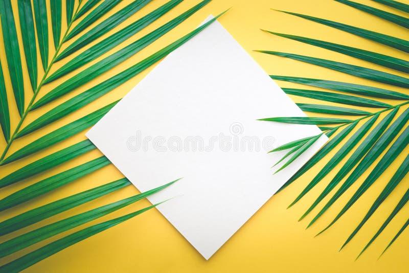 Tropiska palmblad med vitbokkortramen på pastell royaltyfri bild