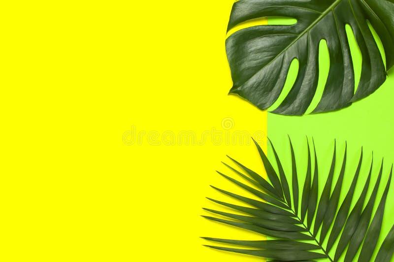 Tropiska palmblad och monsterablad p? pastellf?rgad gul gr?n bakgrund Lekmanna- l?genhet, b?sta sikt, kopieringsutrymme Sommarbak arkivbild