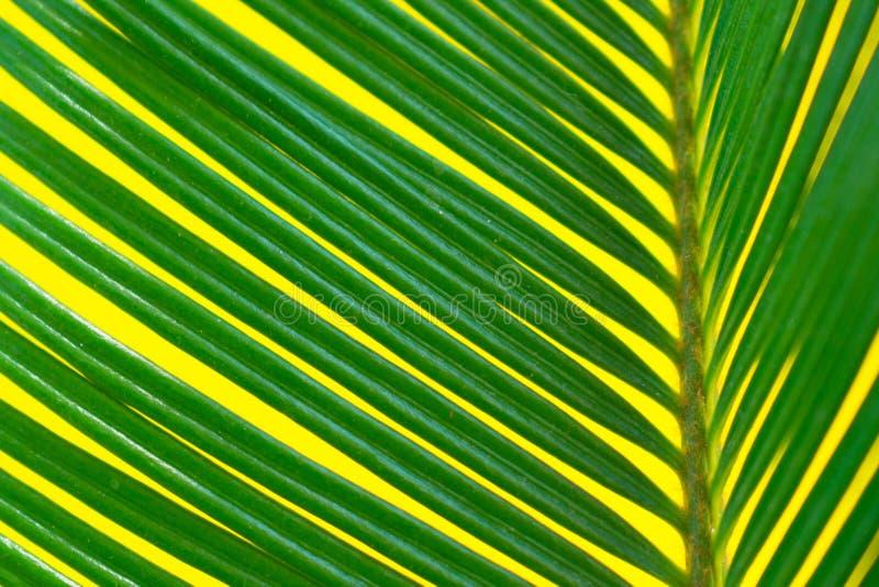 Tropiska palmblad på en ljus gul bakgrundsnärbild sommar f?r sn?ckskal f?r sand f?r bakgrundsbegreppsram Plan bild royaltyfri foto