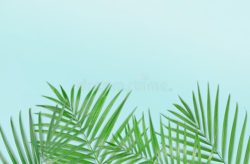 Tropiska palmblad på ljus - blå bakgrund Minsta natur S fotografering för bildbyråer