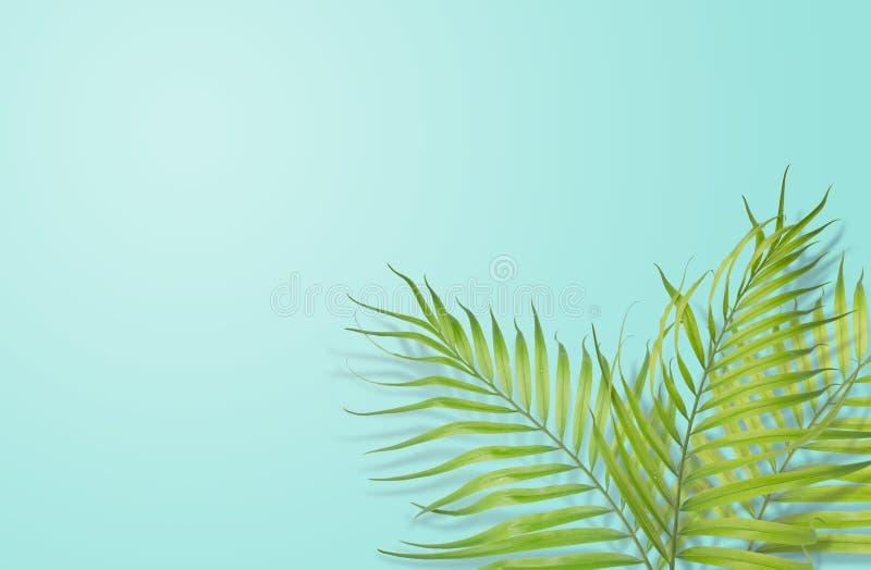 Tropiska palmblad på ljus - blå bakgrund Minsta natur S arkivbilder