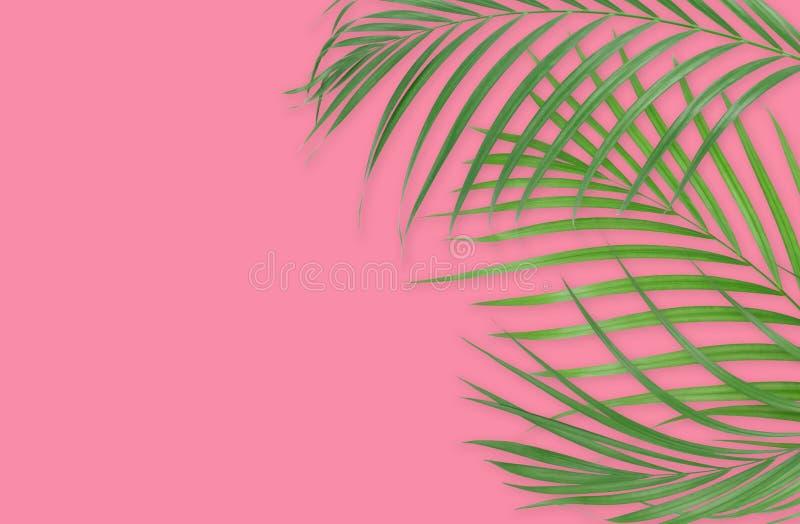 Tropiska palmblad på rosa bakgrund Minsta natur Sommar stock illustrationer