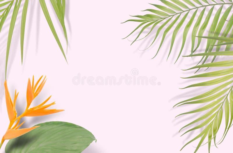 Tropiska palmblad på rosa bakgrund Minsta natur Sommar vektor illustrationer