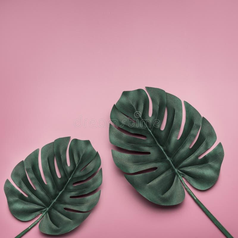 Tropiska palmblad på rosa bakgrund Minsta natursommarbegrepp Lekmanna- lägenhet placera text arkivfoto