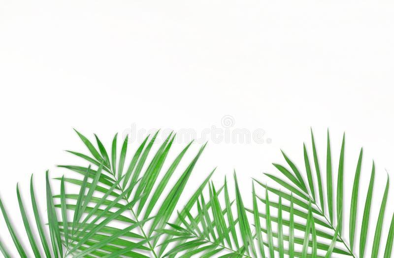 Tropiska palmblad på vit bakgrund Minsta natur Sommar fotografering för bildbyråer