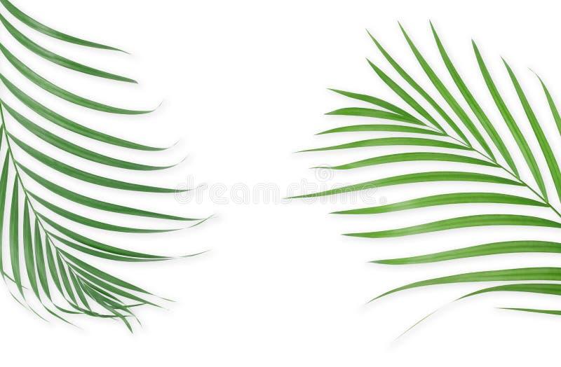 Tropiska palmblad på vit bakgrund Minsta natur Sommar stock illustrationer