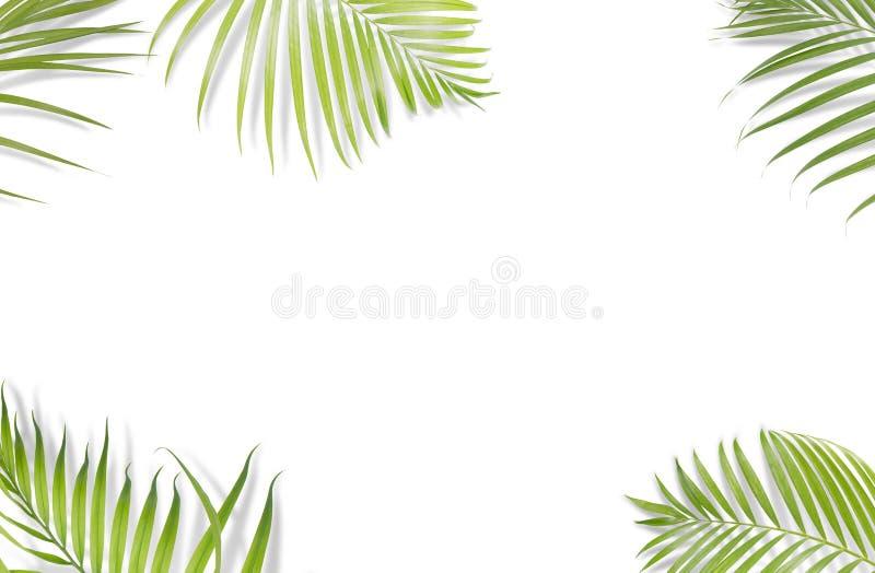 Tropiska palmblad på vit bakgrund Minsta natur Sommar vektor illustrationer