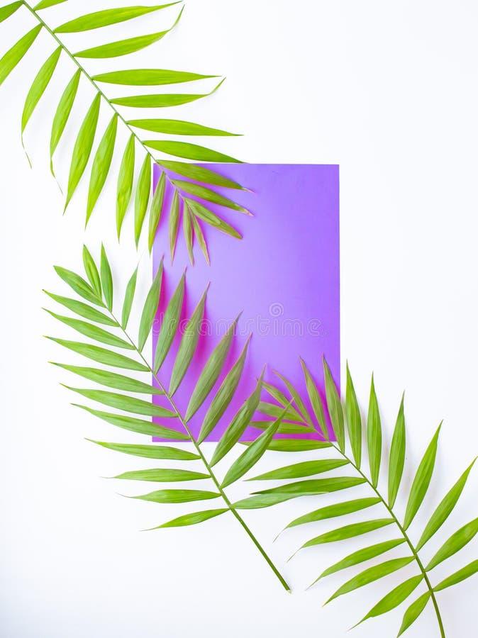 Tropiska palmblad p? lila och purpurf?rgad bakgrund Minsta begrepp Sommar i stil dagleafen g?mma i handflatan taget soligt plante arkivbilder