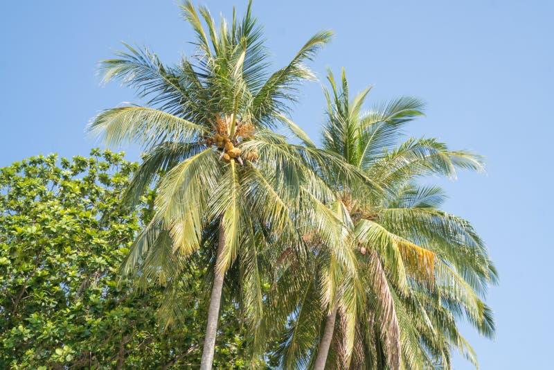 Tropiska palmträd över blå himmel under härlig sommardag arkivfoton