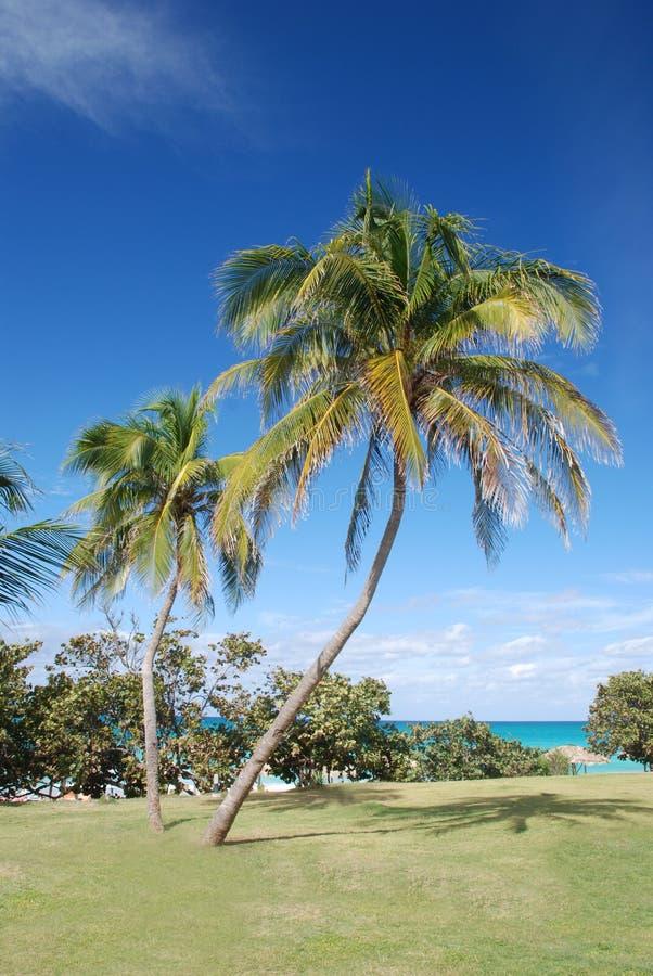 tropiska palmträd royaltyfria bilder