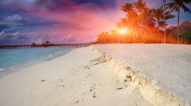 tropiska palmträd för ömaldives hav Maldiverna royaltyfria foton