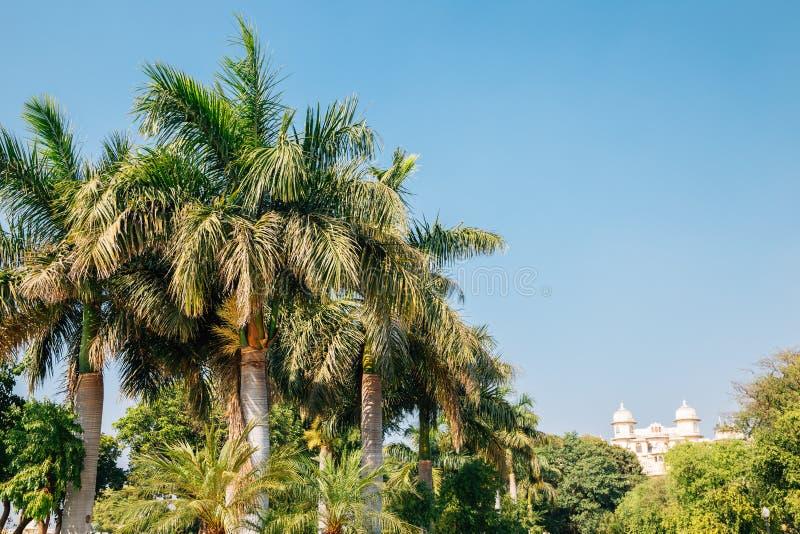 Tropiska palmträd parkerar nära Pichola sjön i Udaipur, Indien arkivbild
