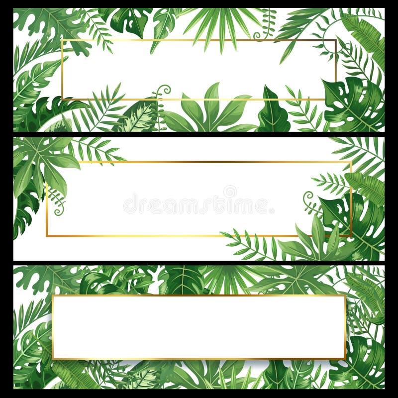 Tropiska sidabaner Det exotiska palmbladbanret, den naturliga kokosnöten gömma i handflatan filialramar och djungelväxtvektorn royaltyfri illustrationer