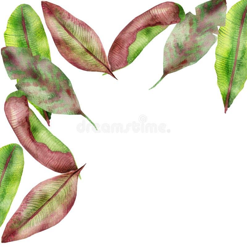 Tropiska sidor för sammansättning för vattenfärg röda, gula och gröna banan, med strimmor som isoleras på en vit bakgrund, för in vektor illustrationer