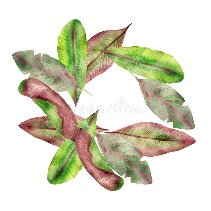 Tropiska sidor för sammansättning för vattenfärg röda, gula och gröna banan, med strimmor som isoleras på en vit bakgrund, för in stock illustrationer