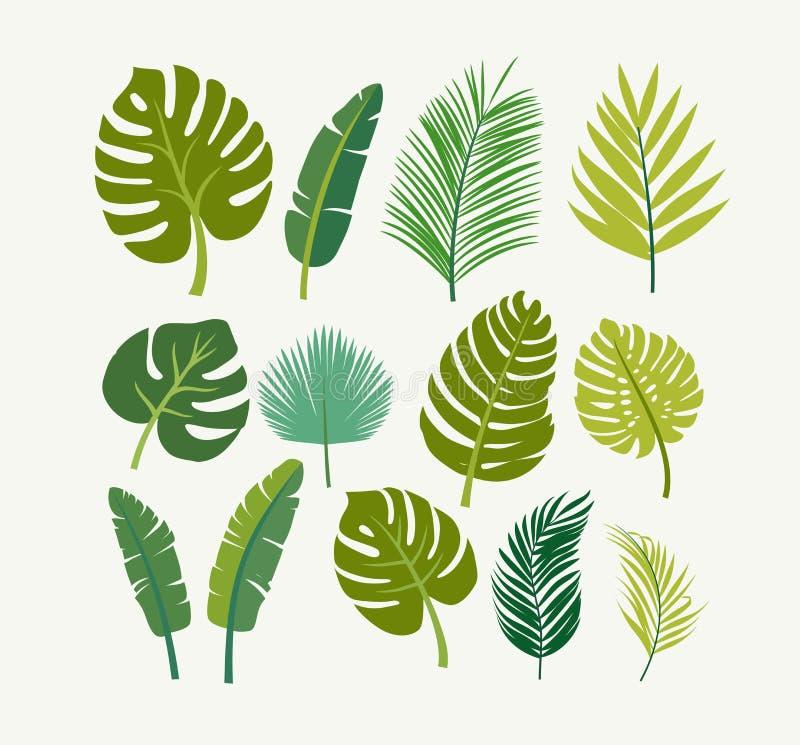 Tropiska sidor gömma i handflatan, träd royaltyfri illustrationer