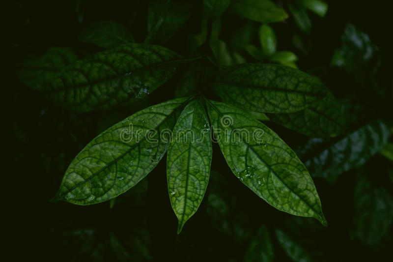 Tropiska sidor i mörk och lynnig skott ett djungel, royaltyfria bilder