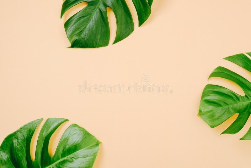 Tropiska sidor Monstera på gul bakgrund med utrymme för en text Lägga framlänges, den bästa sikten, pastellfärgade färger, minsta royaltyfria foton