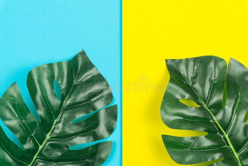 Tropiska sidor Monstera på gul och blå bakgrund Lekmanna- l?genhet, b?sta sikt royaltyfri fotografi