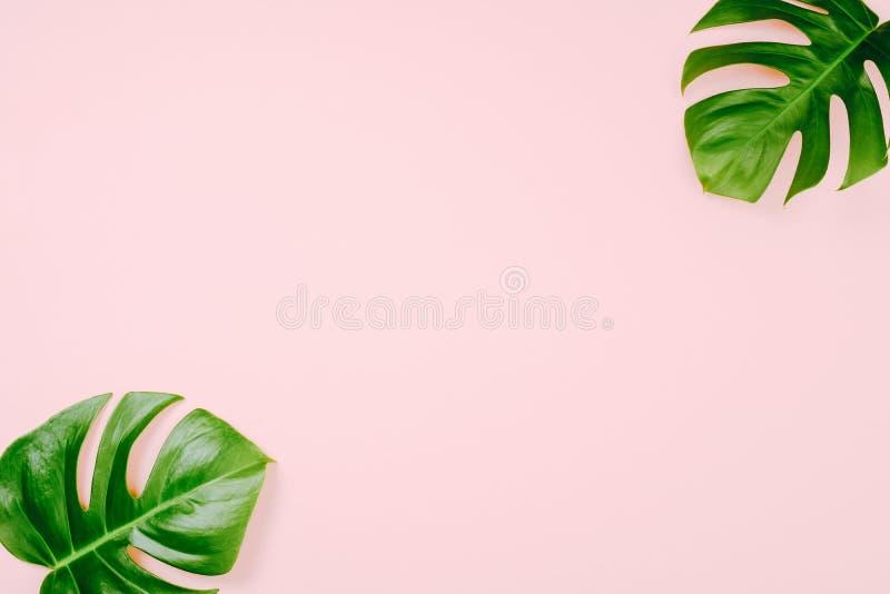 Tropiska sidor Monstera på rosa bakgrund med utrymme för en text Lägga framlänges, den bästa sikten, pastellfärgade färger, minst royaltyfri fotografi