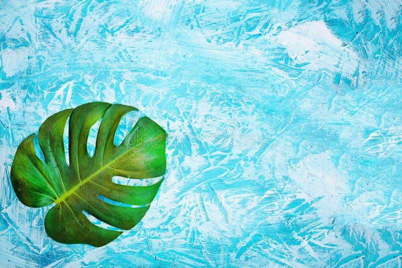 tropiska sidor, monsterablad på blå bakgrund Exotiskt begrepp f?r minsta sommar med kopieringsutrymme arkivfoton