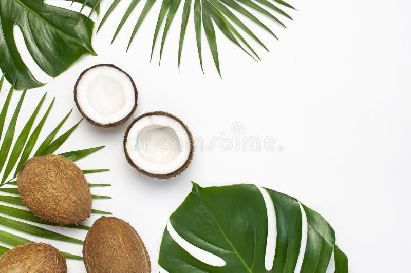 Tropiska sidor och ny kokosn?t p? ljust - gr? bakgrund Lekmanna- l?genhet, b?sta sikt, kopieringsutrymme Sommarbakgrund, natur Su royaltyfria foton