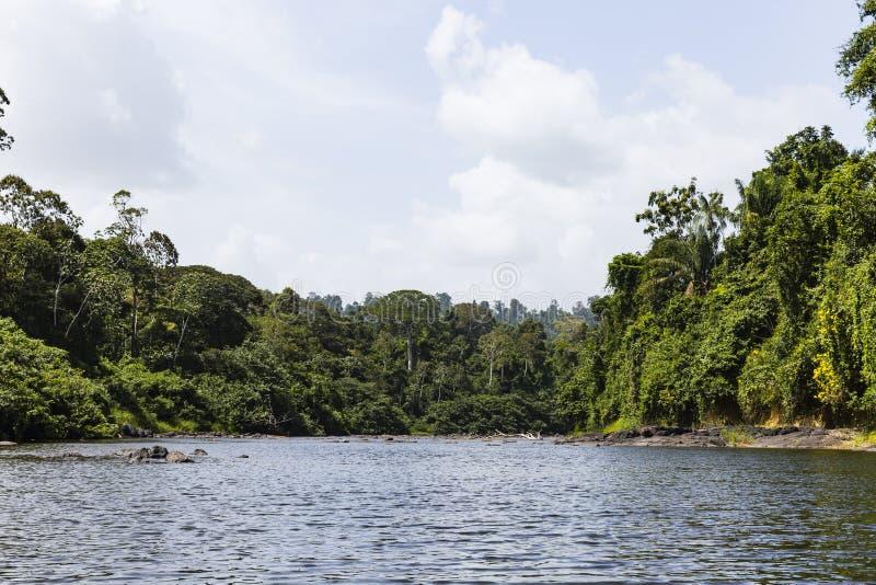Tropiska träd längs en flod arkivfoto
