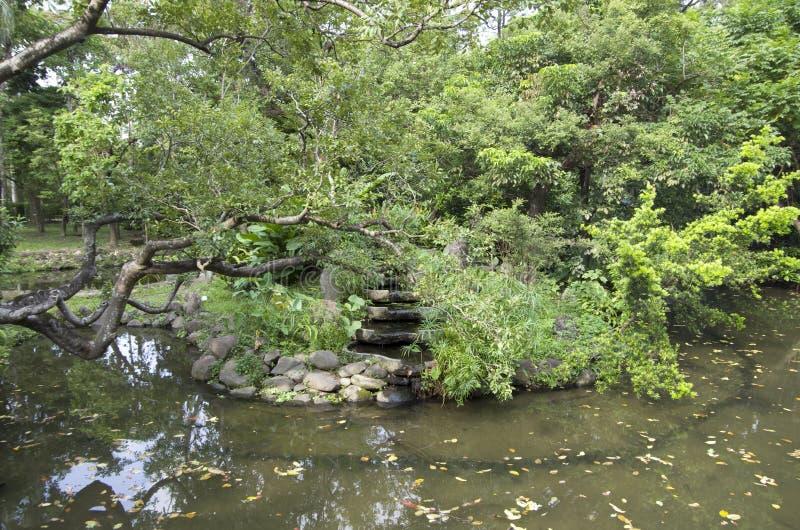 Tropiska träd och damm i botaniska trädgården Taipei royaltyfri bild