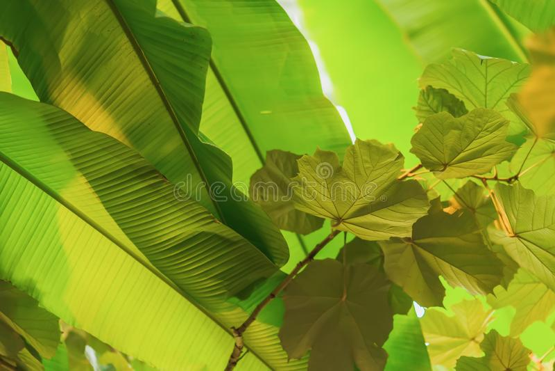 Tropiska trädfilialer med ljus, lövverk, ny exotisk botanisk modell Naturlig grön tropisk textur av ljust royaltyfri fotografi