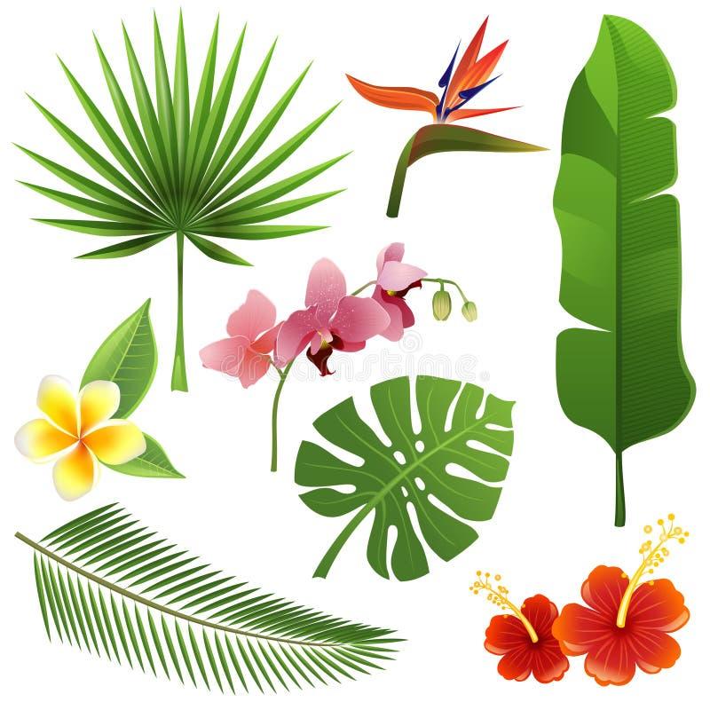 Tropiska växter vektor illustrationer