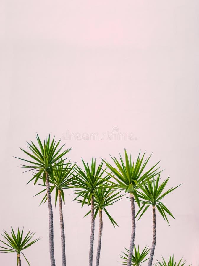 Tropiska växter för Hawaii hotell arkivfoto