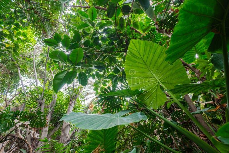 Tropiska växter i skog- eller djungel-/rainforestlandskap - royaltyfria bilder