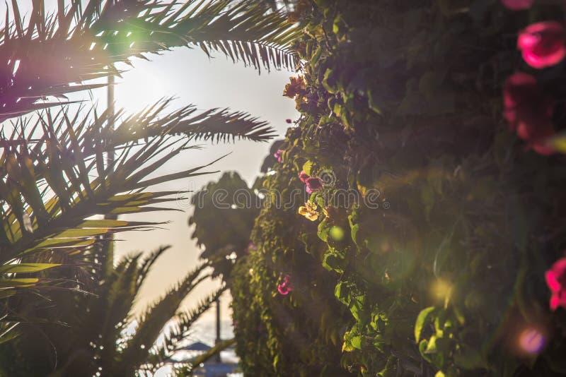 Tropiska växter nära en strand i sommarsolsken royaltyfria bilder