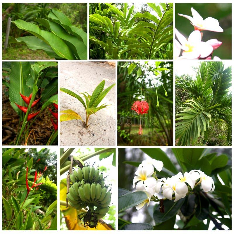 Tropiska växter och blommor royaltyfria bilder