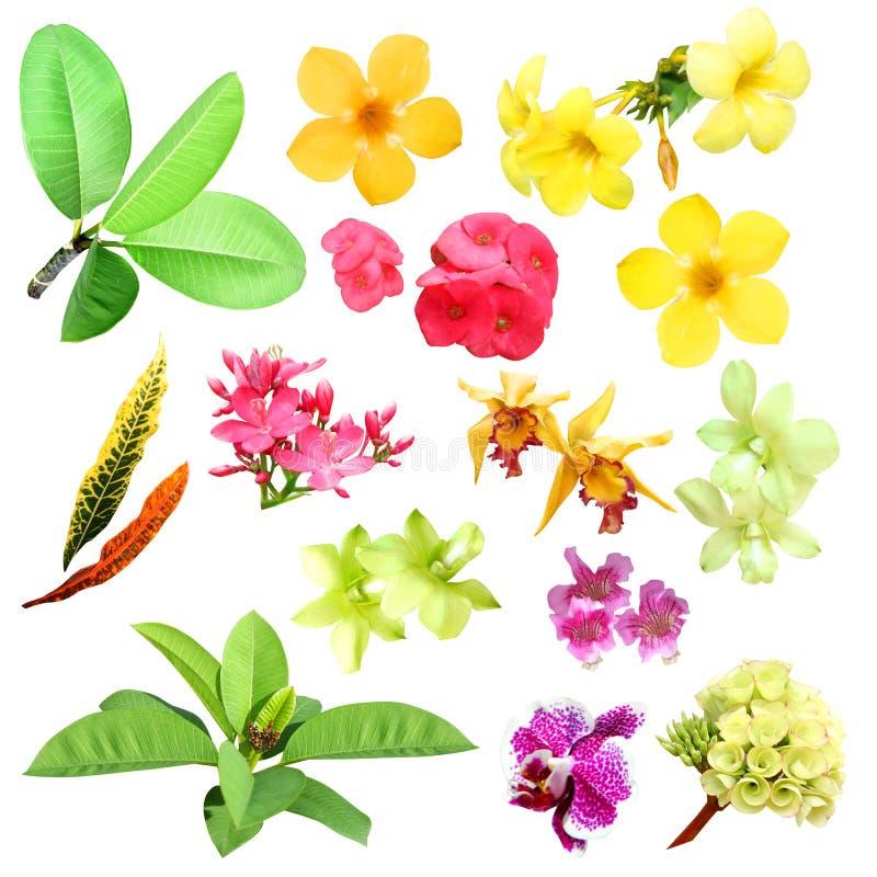 Tropiska växter och blommor royaltyfri foto