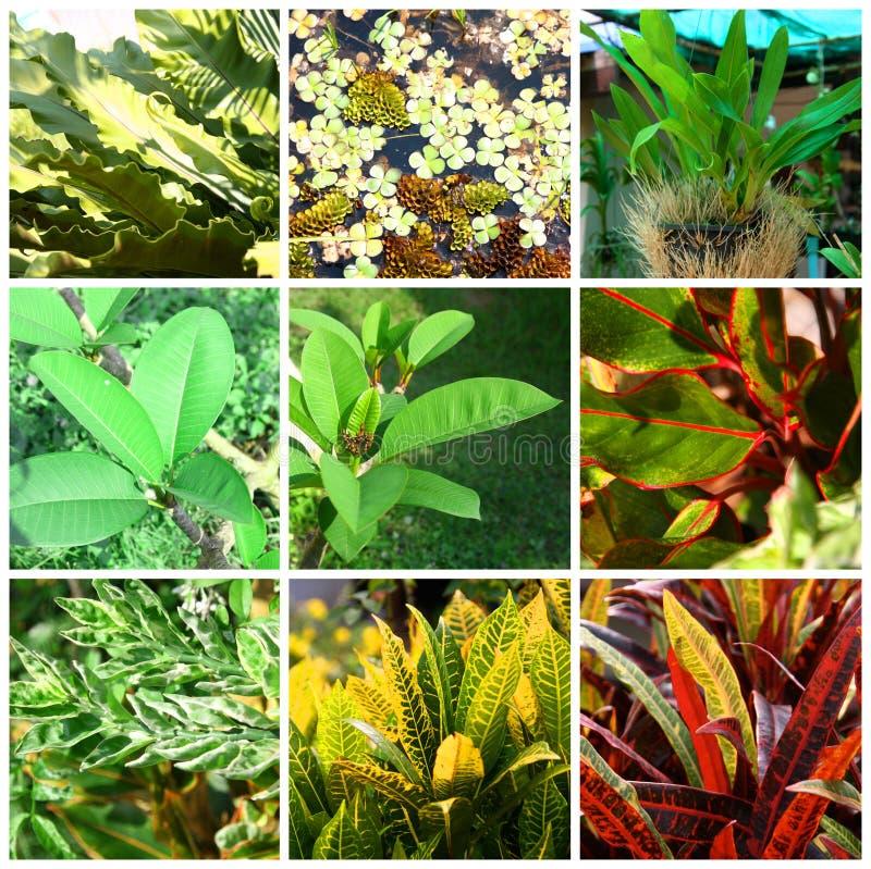 Tropiska växter och blommor arkivfoto