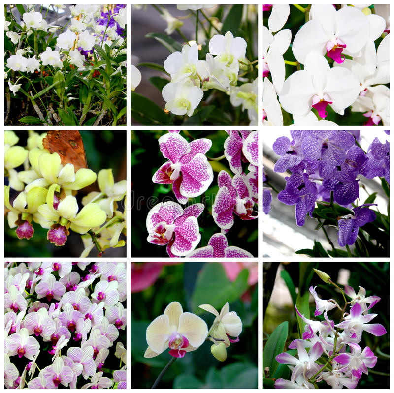 Tropiska växter och blommor royaltyfri fotografi