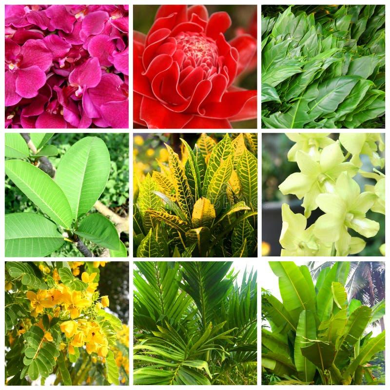 Tropiska växter och blommor royaltyfria foton
