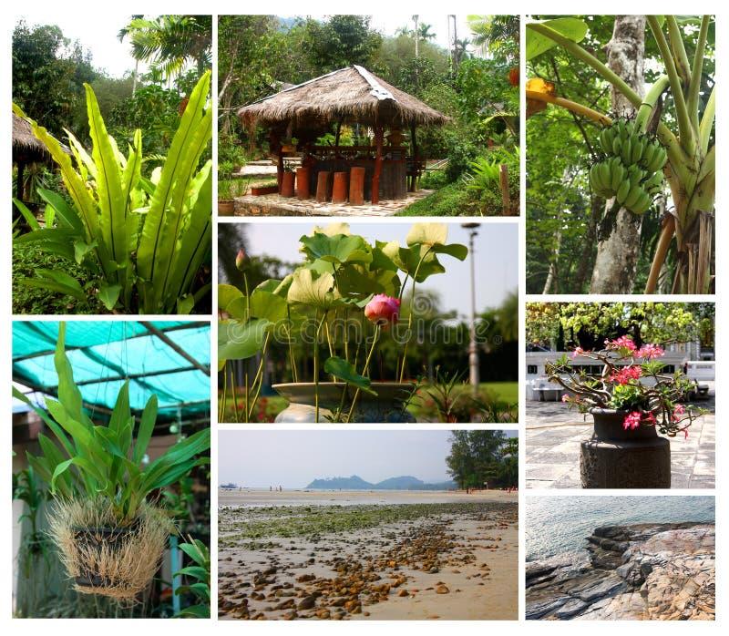 Tropiska växter och landskap arkivfoton