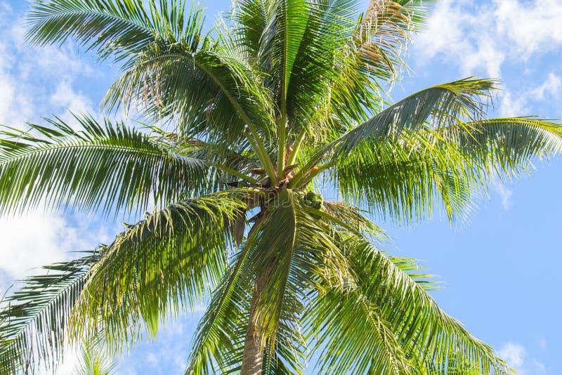 Tropiskt öfoto för palmträd och för blå himmel Soligt exotiskt sommarkort royaltyfria foton