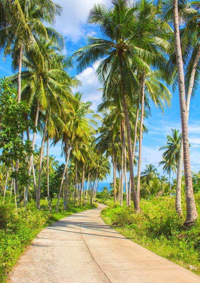 Tropiskt öresandelandskap Tomma väg och palmträd arkivfoto