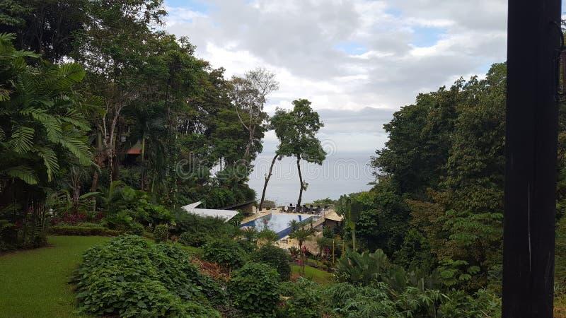tropiskt royaltyfri foto