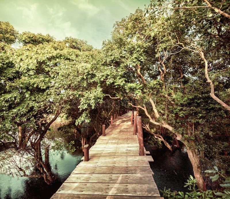 Tropiskt djungellandskap med träbron på översvämmat regn för arkivfoton