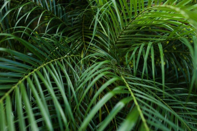Tropiskt djupt - grönt lövverkbakgrundsfoto fotografering för bildbyråer