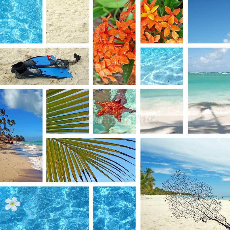 tropiskt exotiskt lopp för collage fotografering för bildbyråer