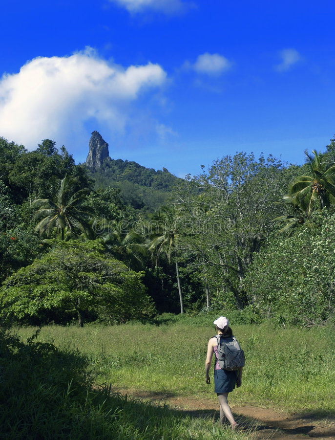 tropiskt gå arkivbild