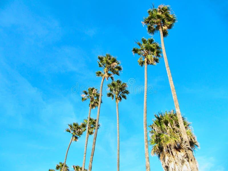 Tropiskt gömma i handflatan med en sagolik blå himmel fotografering för bildbyråer
