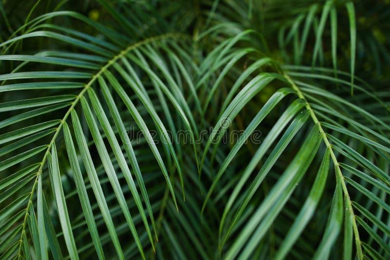 Tropiskt grönt stort lövverkbakgrundsfoto fotografering för bildbyråer