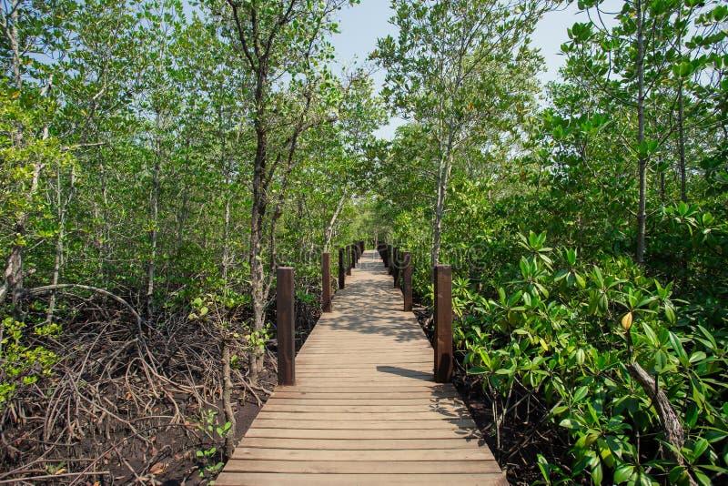 Tropiskt klimat, Rayong, Thailand, mangroveskog, bro - byggd struktur royaltyfri fotografi